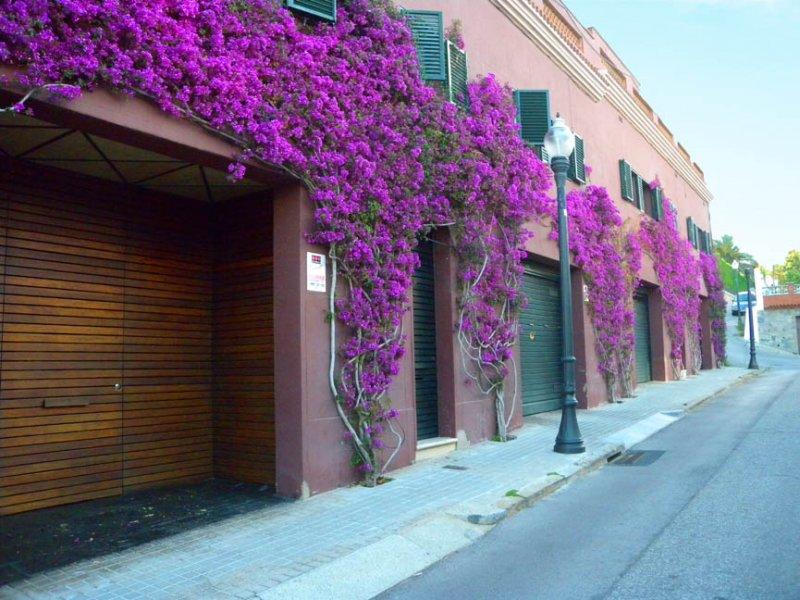 Alquiler de pisos con encanto en Barcelona | Torrent de les Roses ...